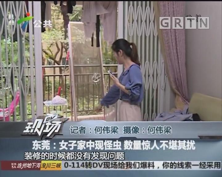 东莞:女子家中现怪虫 数量惊人不堪其扰