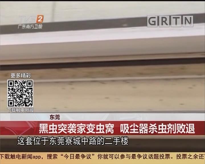东莞:黑虫突袭家变虫窝 吸尘器杀虫剂败退