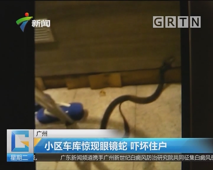 广州:小区车库惊现眼镜蛇 吓坏住户