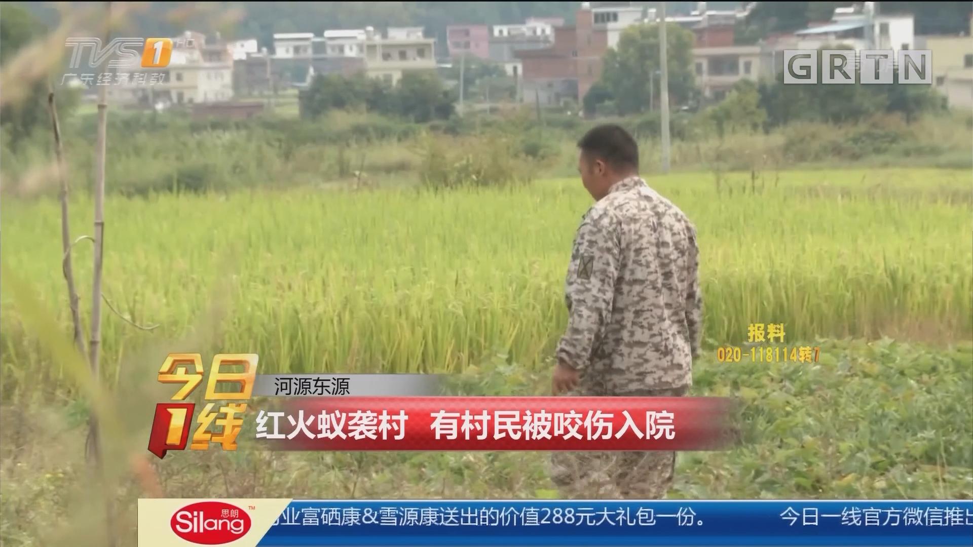 河源东源:红火蚁袭村 有村民被咬伤入院
