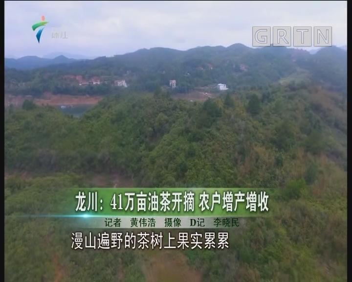 龙川:41万亩油茶开摘 农户增产增收