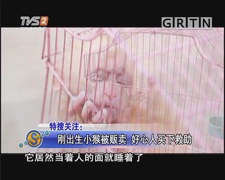 刚出生小猴被贩卖 好心人买下救助