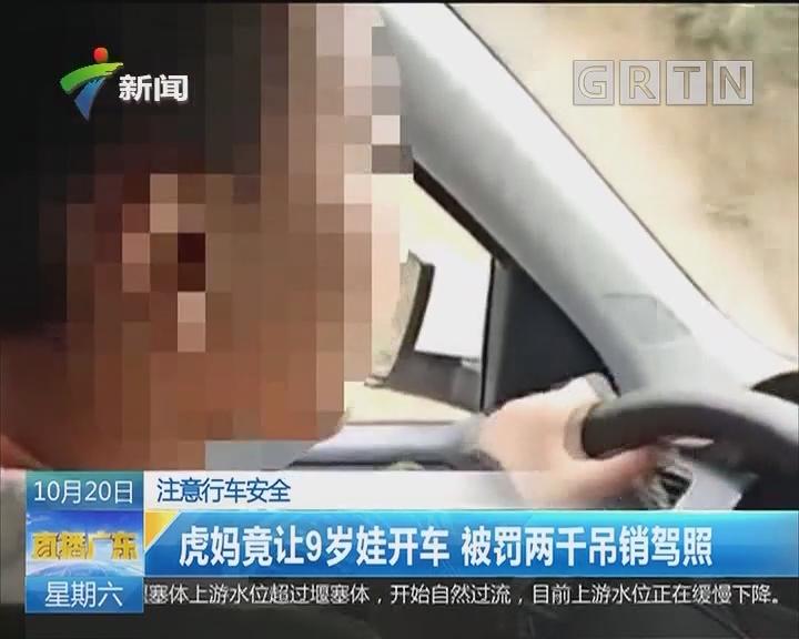 注意行车安全:虎妈竟让9岁娃开车 被罚两千吊销驾照