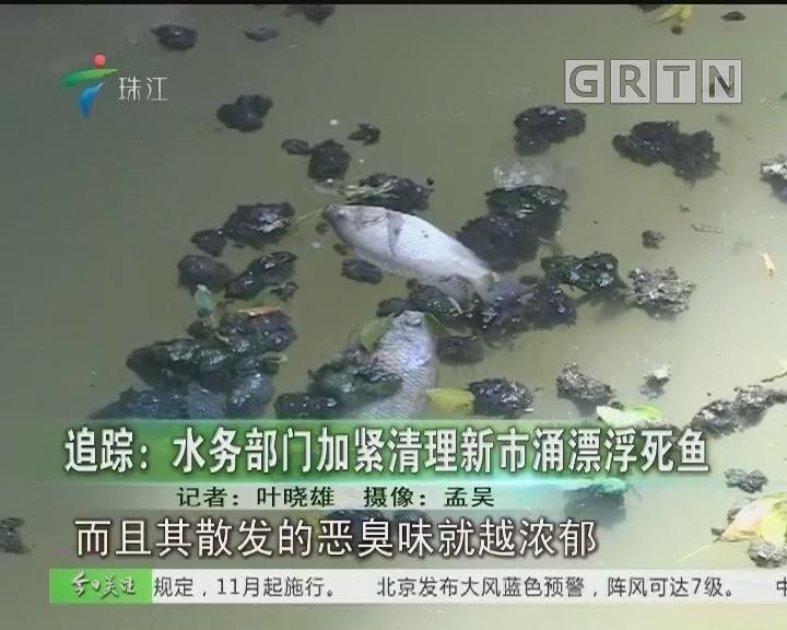 追踪:水务部门加紧清理新市涌漂浮死鱼