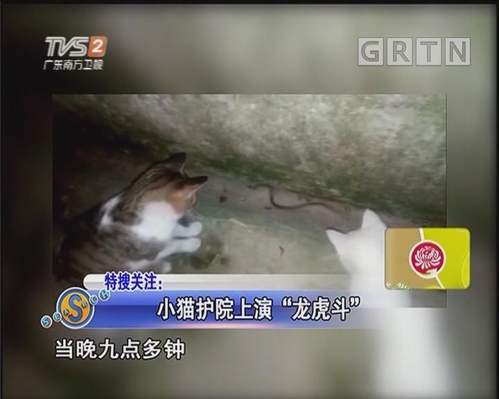 """小猫护院上演""""龙虎斗"""""""