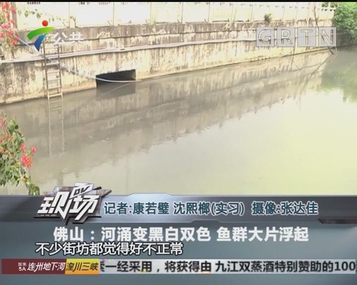 佛山:河涌变黑白双色 鱼群大片浮起