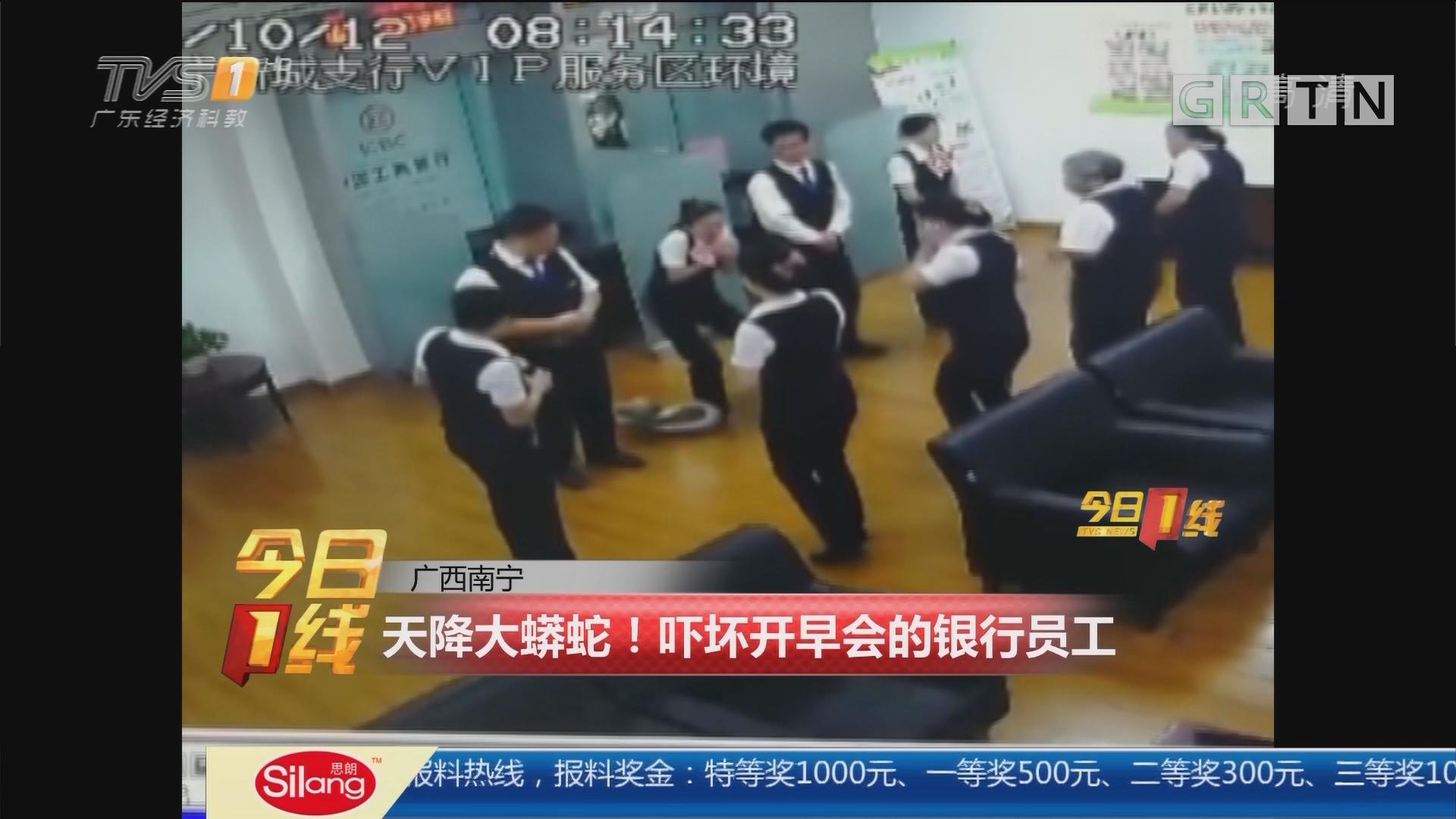 广西南宁:天降大蟒蛇!吓坏开早会的银行员工