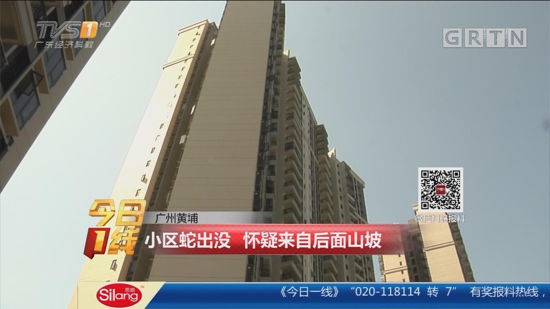 广州黄埔:小区蛇出没 怀疑来自后面山坡