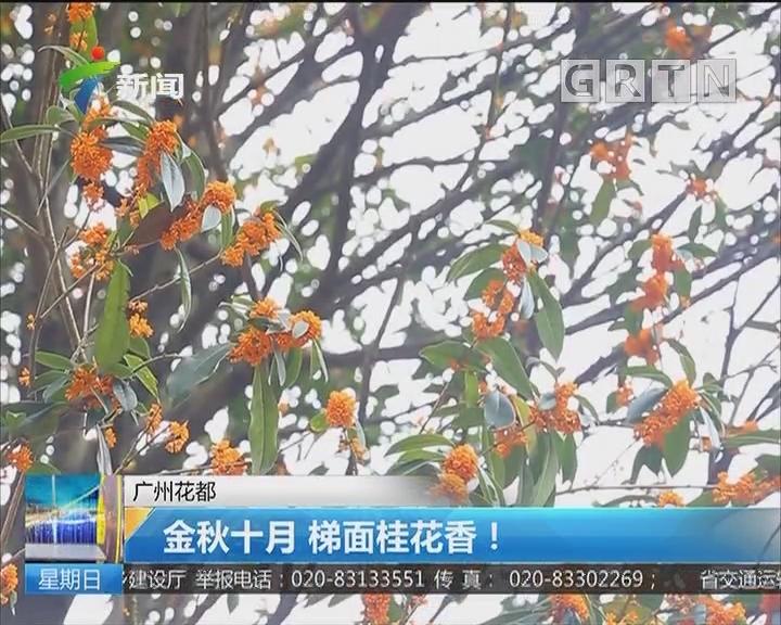 广州花都:金秋十月 梯面桂花香!