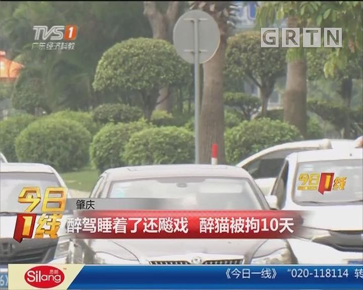肇庆:醉驾睡着了还飚戏 醉猫被拘10天