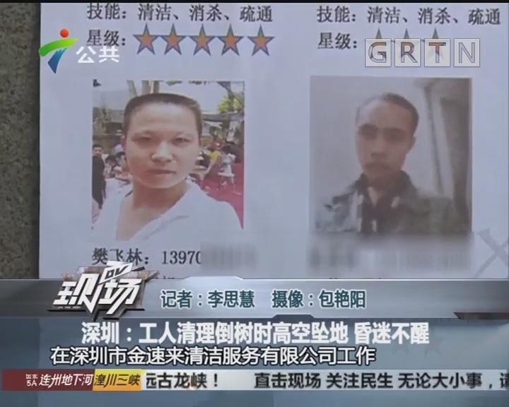 深圳:工人清理倒树时高空坠地 昏迷不醒