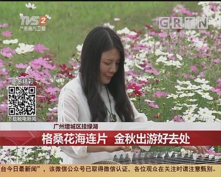 广州增城区挂绿湖:格桑花海连片 金秋出游好去处