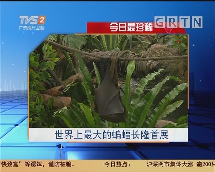 今日最珍稀:世界上最大的蝙蝠长隆首展
