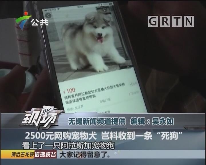 """2500元网购宠物犬 岂料收到一条""""死狗"""""""