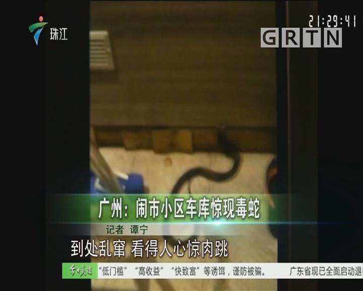 广州:闹市小区车库惊现毒蛇