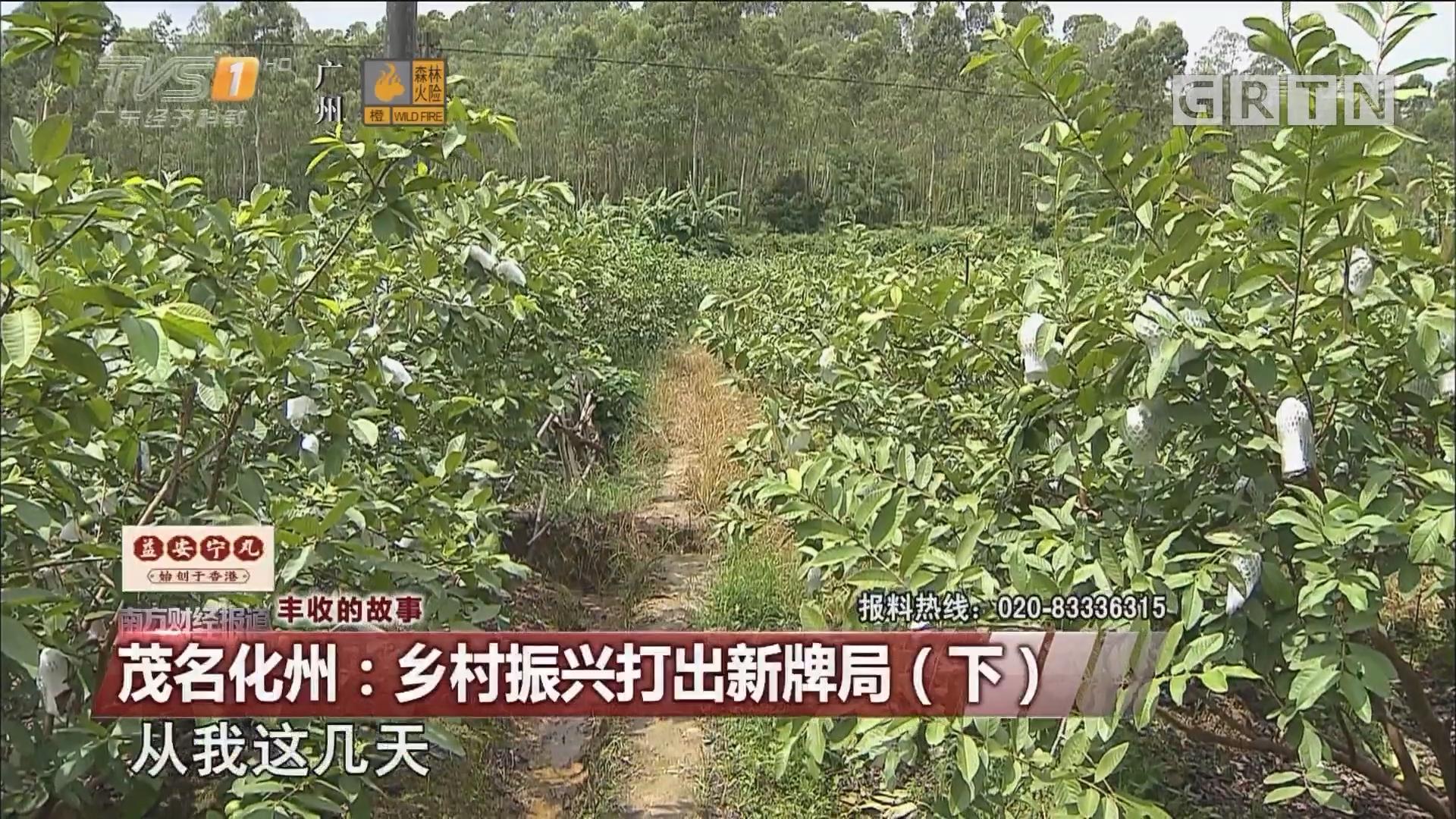 丰收的故事 茂名化州:乡村振兴打出新牌局(下)