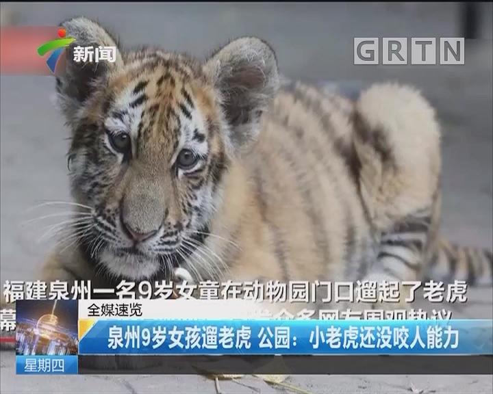 泉州9岁女孩遛老虎 公园:小老虎还没咬人能力