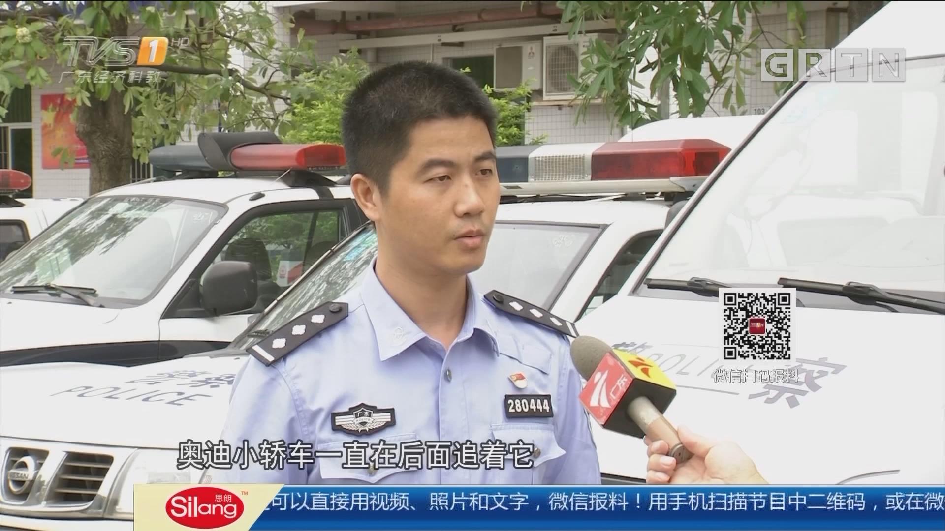 """东莞常平:交警刑警联手 酒驾""""碰瓷专业户""""落网"""