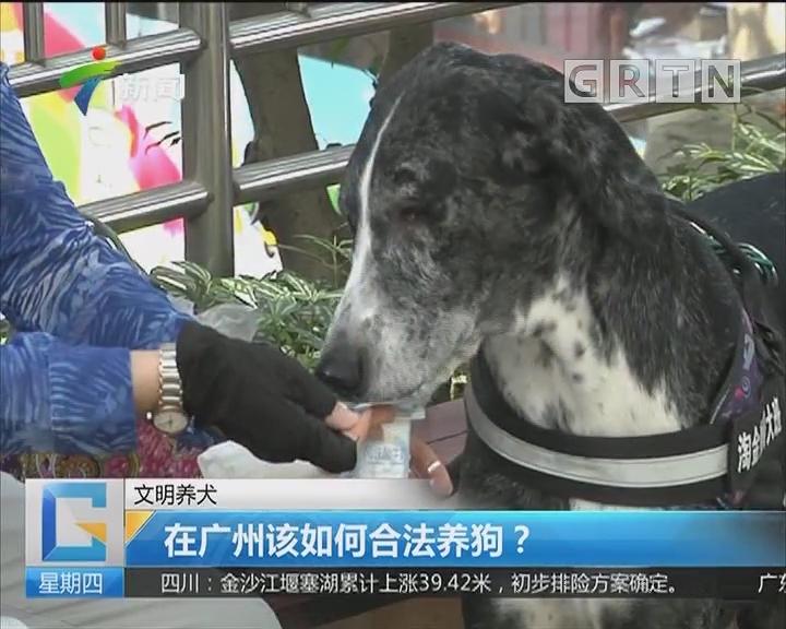 文明养犬:在广州该如何合法养狗?