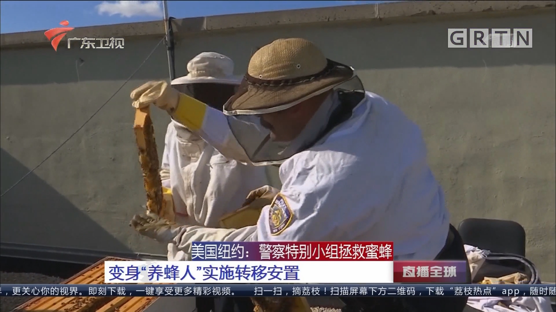 """美国纽约:警察特别小组拯救蜜蜂 变身""""养蜂人""""实施转移安置"""