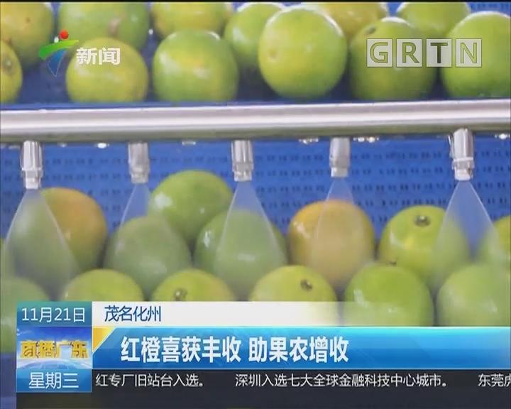 茂名化州:红橙喜获丰收 助果农增收