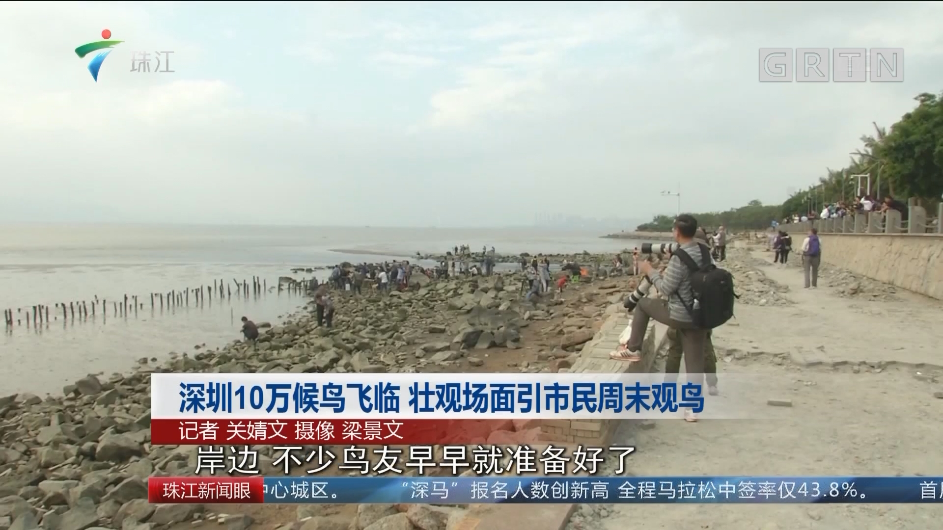 深圳10万候鸟飞临 壮观场面引市民周末观鸟