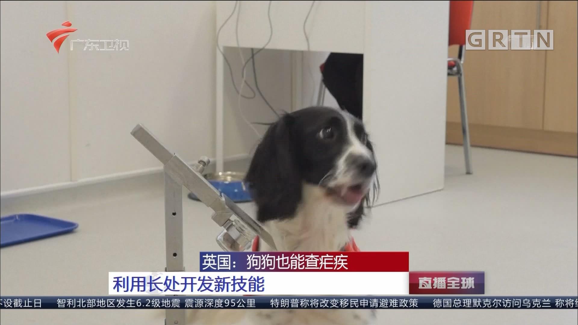 英国:狗狗也能查疟疾 利用长处开发新技能