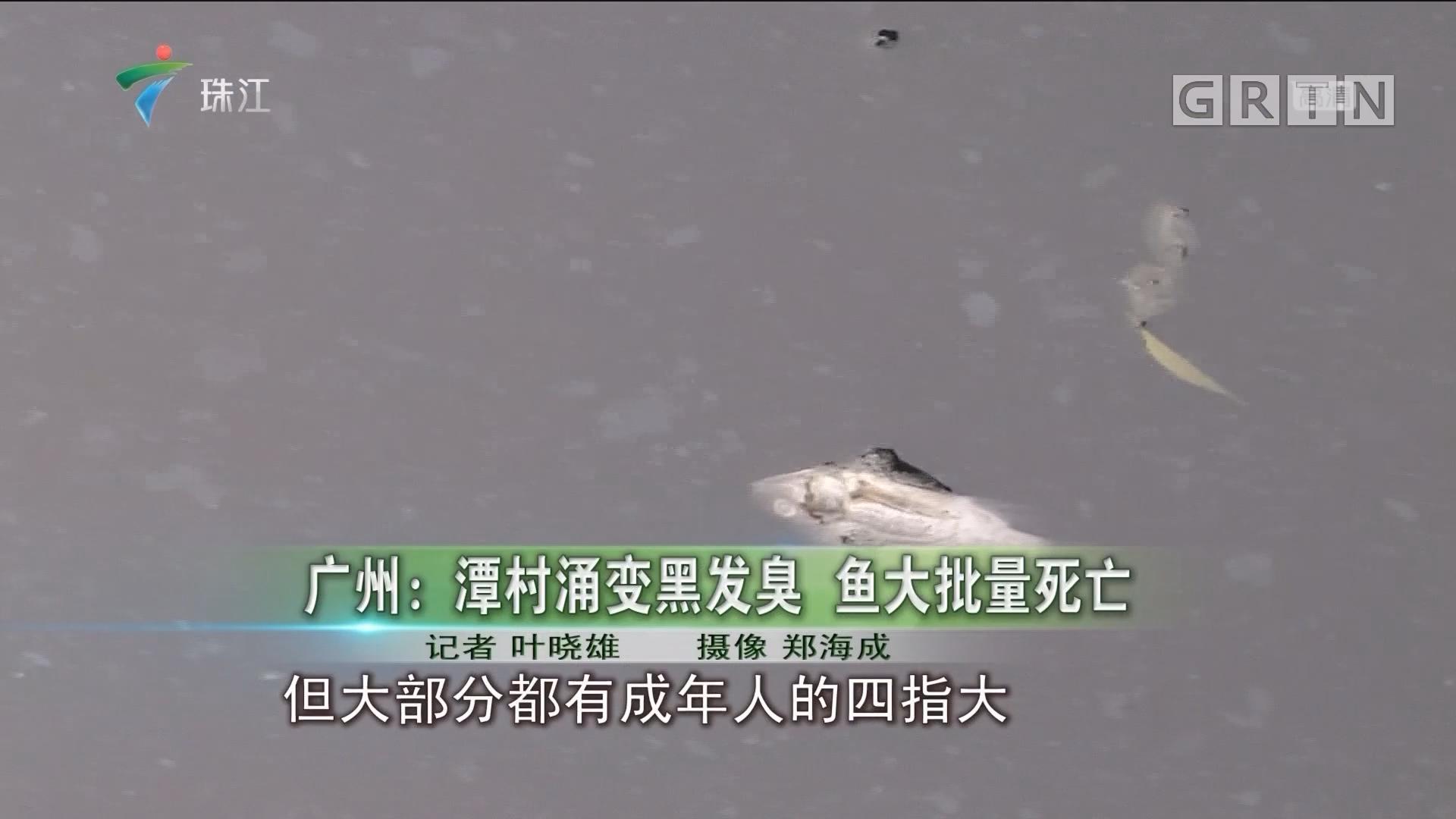 广州:潭村涌变黑发臭 鱼大批量死亡