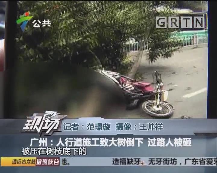 广州:人行道施工致大树倒下 过路人被砸