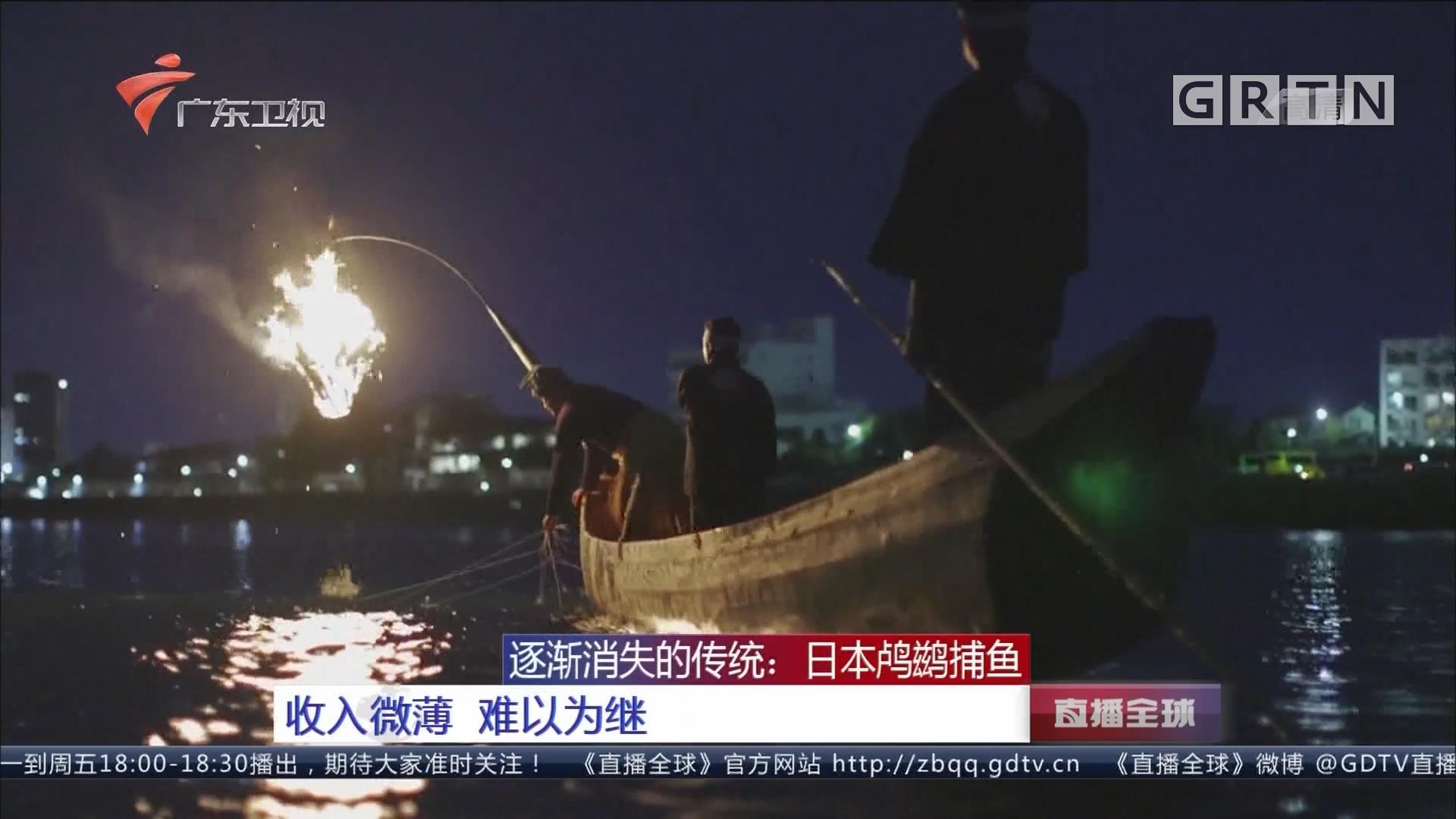 逐渐消失的传统:日本鸬鹚捕鱼 收入微薄 难以为继