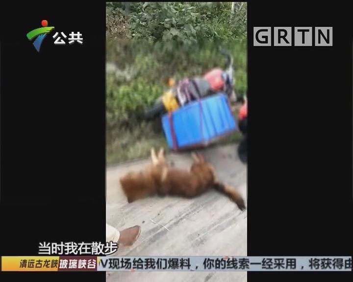 男子疑于村内多次偷狗 遭遇村民合力围捕