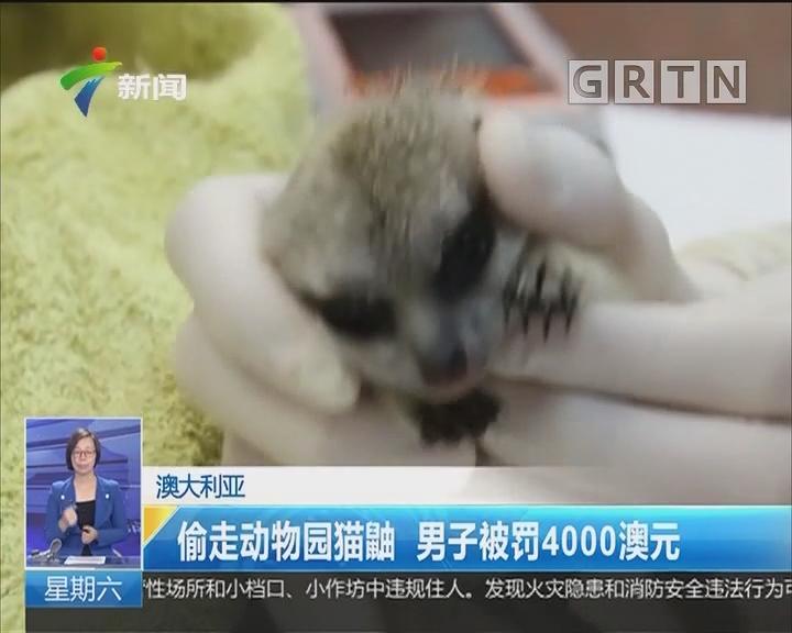 澳大利亚:偷走动物园猫鼬 男子被罚4000澳元