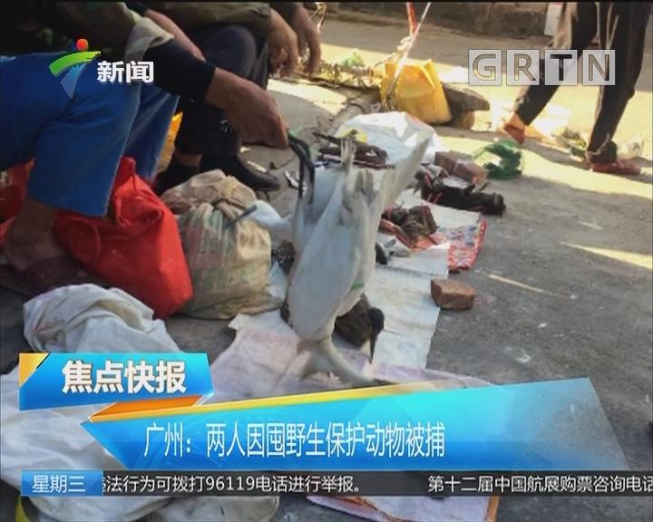 广州:两人因囤野生保护动物被捕