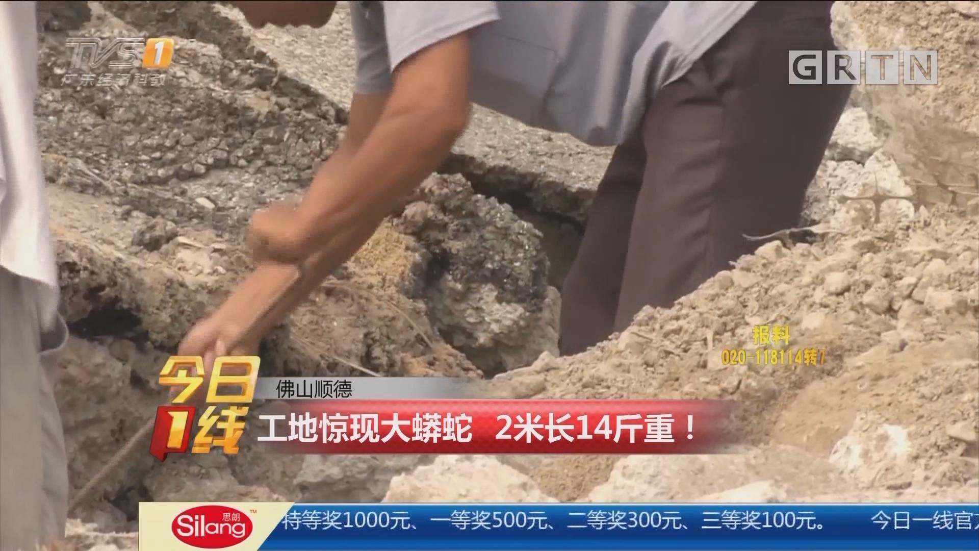 佛山顺德:工地惊现大蟒蛇 2米长14斤重!