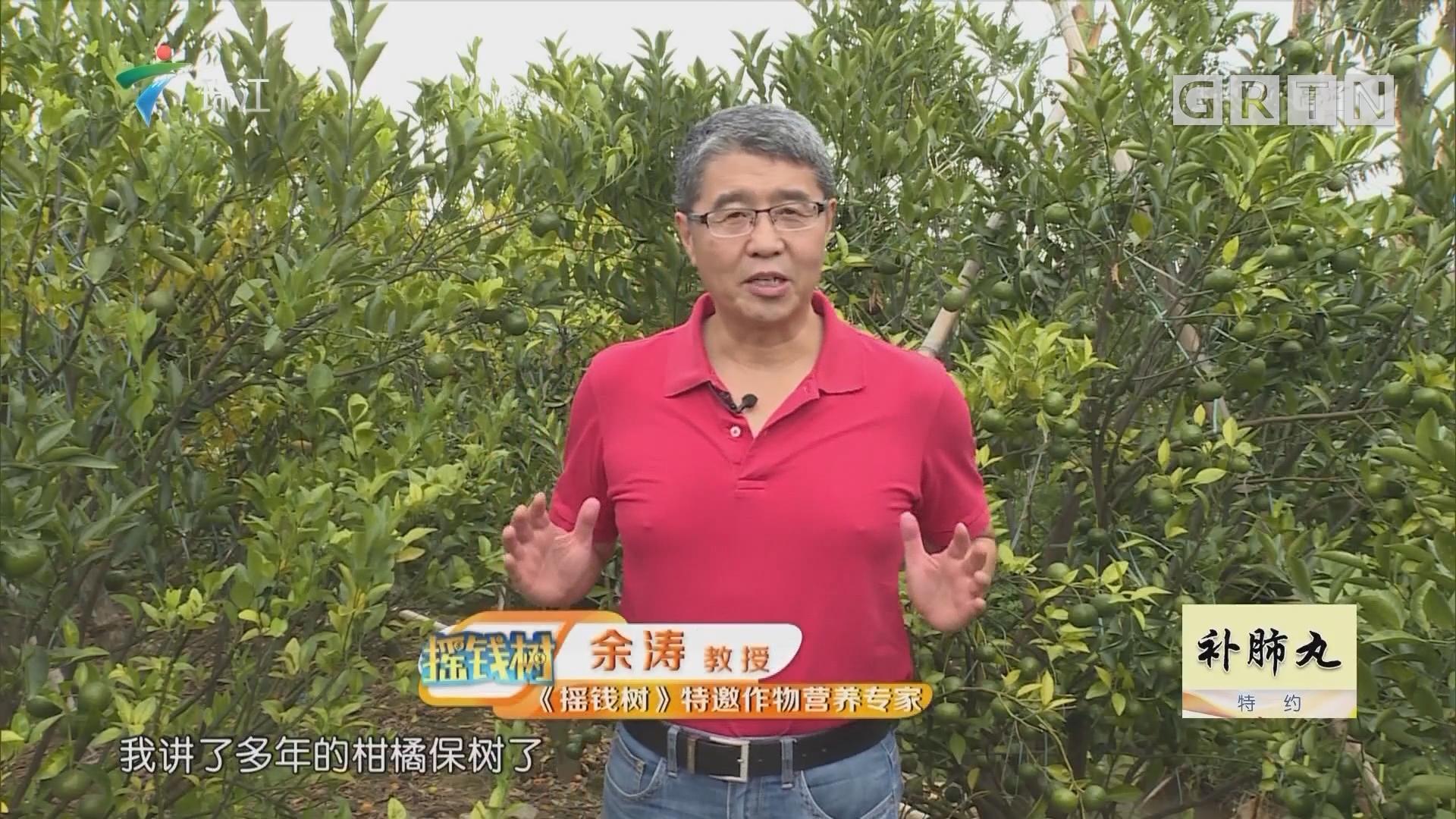 [2018-11-19]摇钱树:回乡创业 打造农业科普游