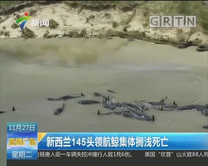 新西兰145头领航鲸集体搁浅死亡