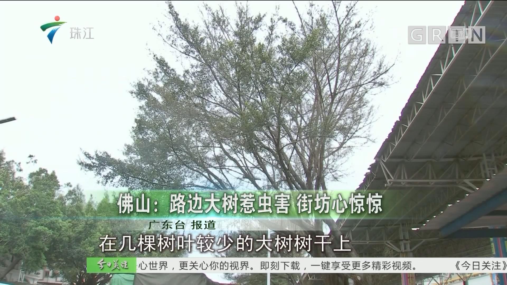 佛山:路边大树惹虫害 街坊心惊惊