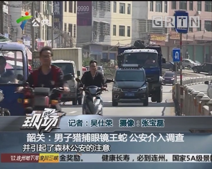 韶关:男子猎捕眼镜王蛇 公安介入调查