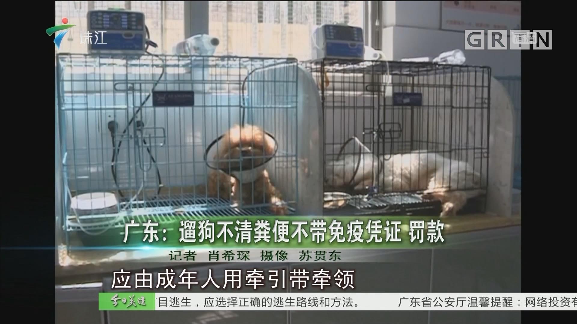 广东:遛狗不清粪便不带免疫凭证 罚款