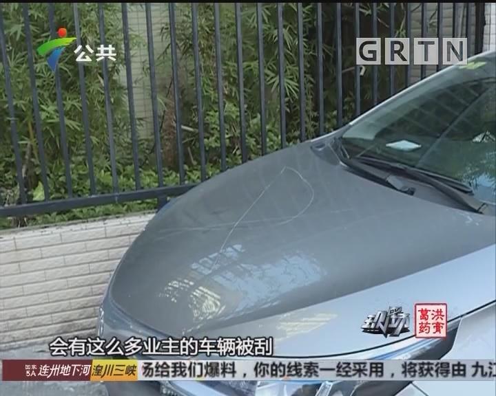 增城:一觉醒来 十多台车被无故刮花