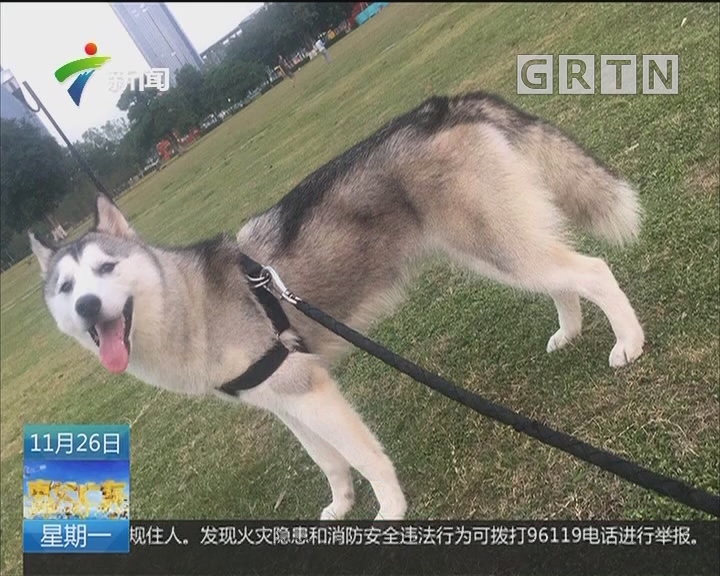 东莞:南城会展中心草坪上一晚多只狗死亡