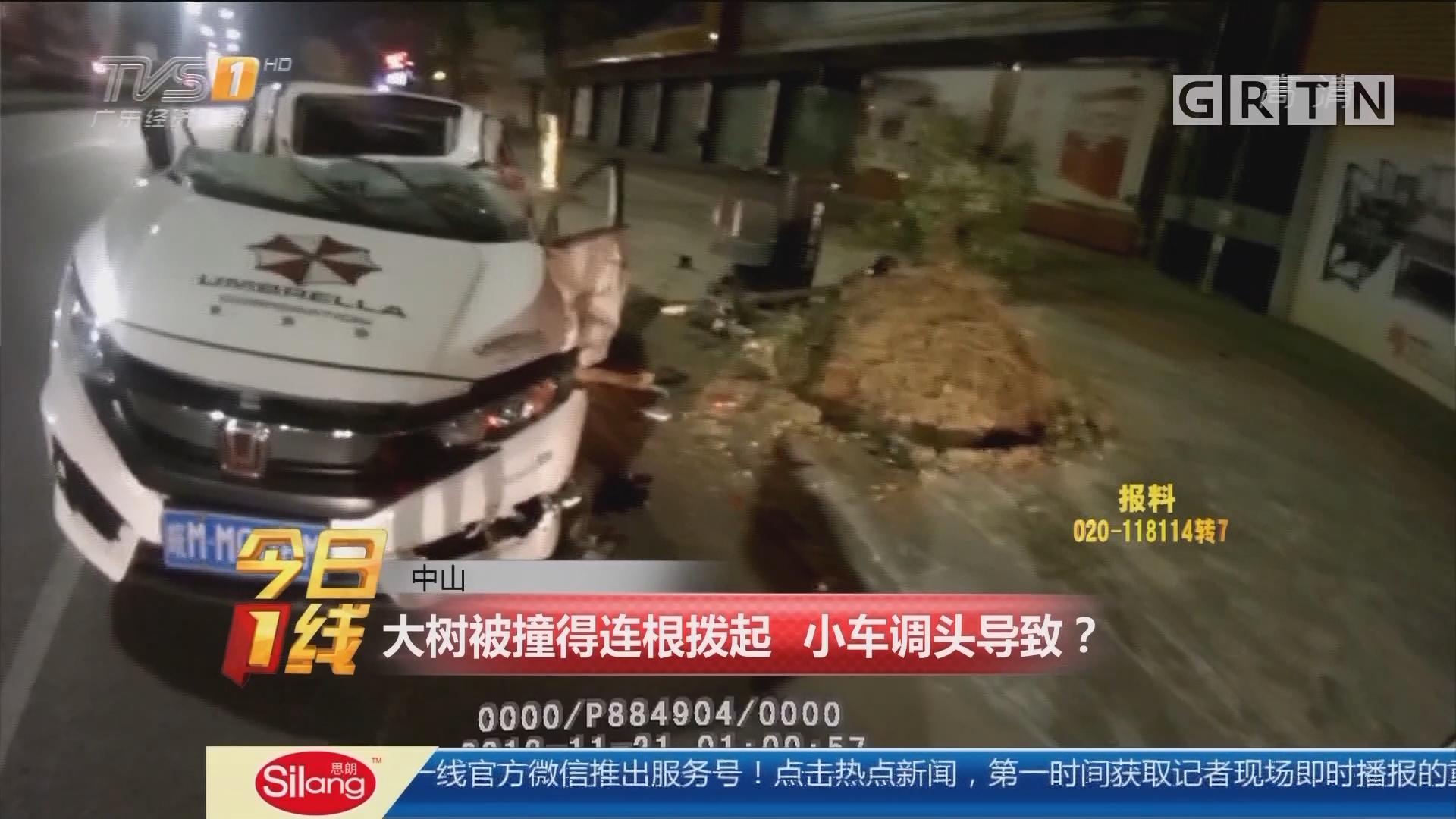 中山:大树被撞得连根拨起 小车调头导致?