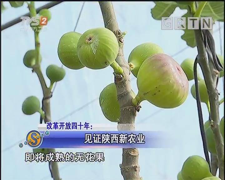 见证陕西新农业