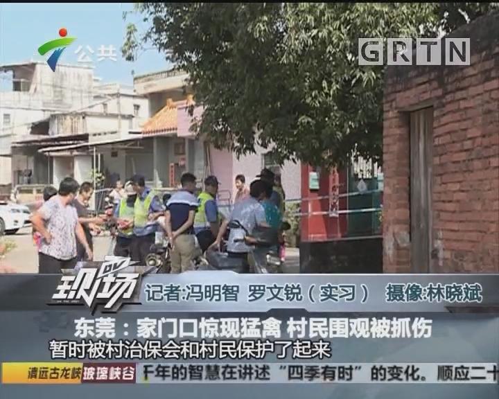东莞:家门口惊现猛禽 村民围观被抓伤