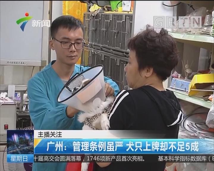 广州:管理条例虽严 犬只上牌却不足5成