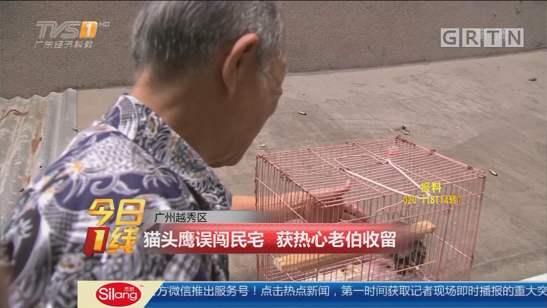 广州越秀区:猫头鹰误闯民宅 获热心老伯收留