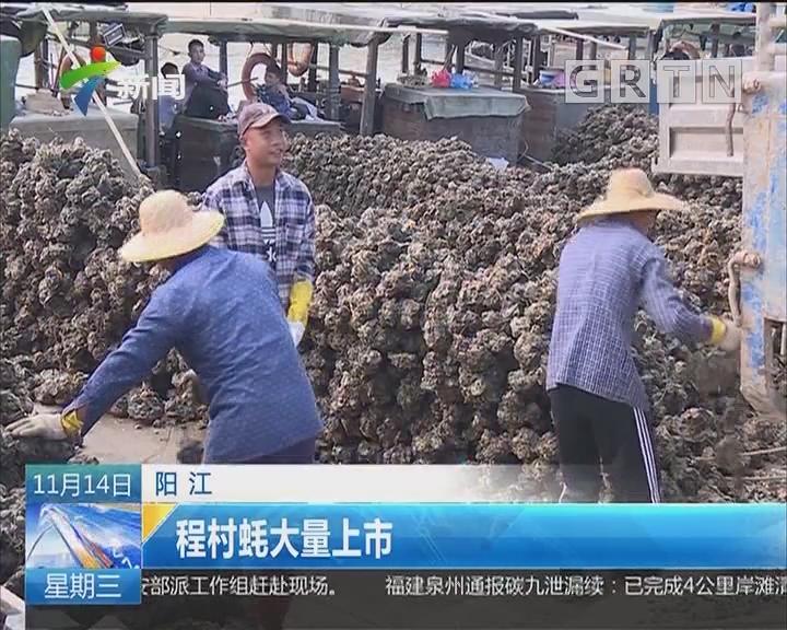 阳江:程村蚝大量上市