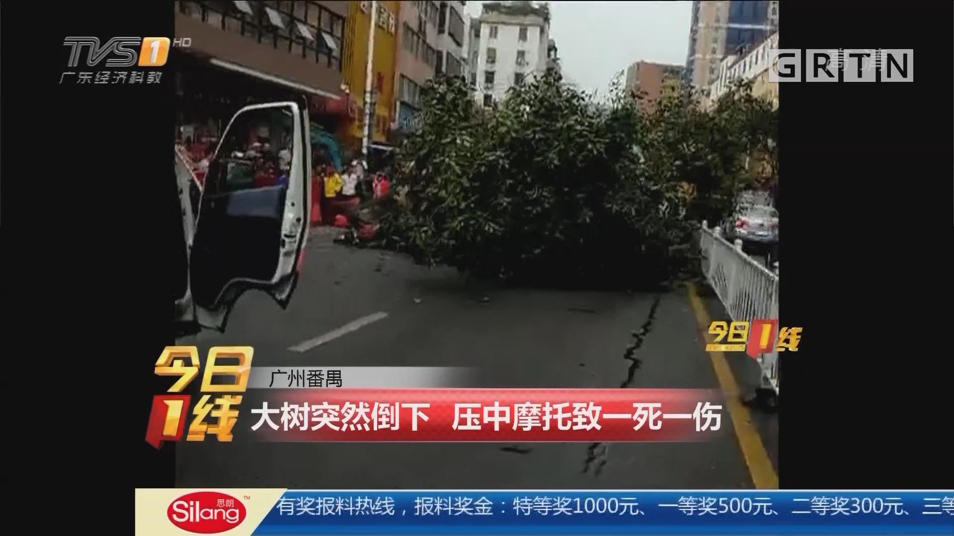 广州番禺:大树突然倒下 压中摩托致一死一伤