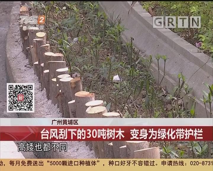 广州黄埔区:台风刮下的30吨树木 变身为绿化带护栏