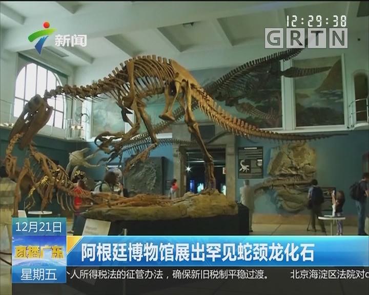 阿根廷博物馆展出罕见蛇颈龙化石
